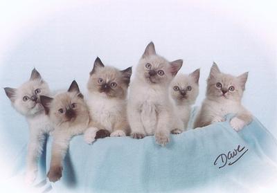The Board Room Kittens