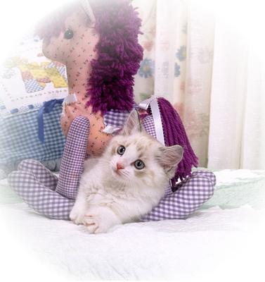 CH Encore Cat's Robin Goodfellow